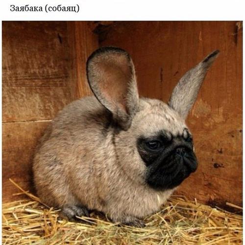 Прикольные животные фото с надписями до слёз
