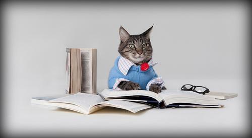 Заговор, помогающий сделать из вашего кота воспитанного питомца